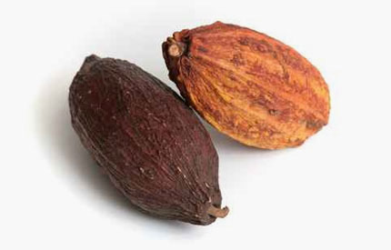 fève cacao